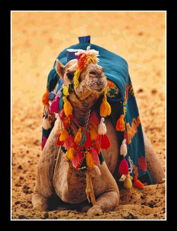 egipte01.jpg