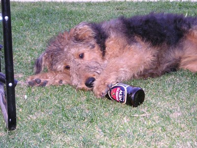 dogswithbeer01.jpg
