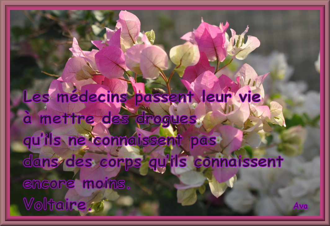 bougainvilliersa20385396.jpg
