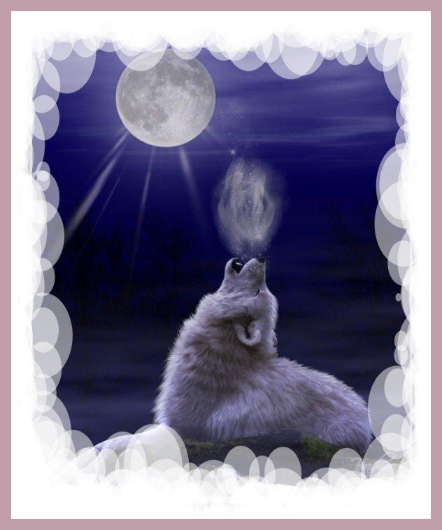 Le cri des loups. dans Entre nous ac5f2102
